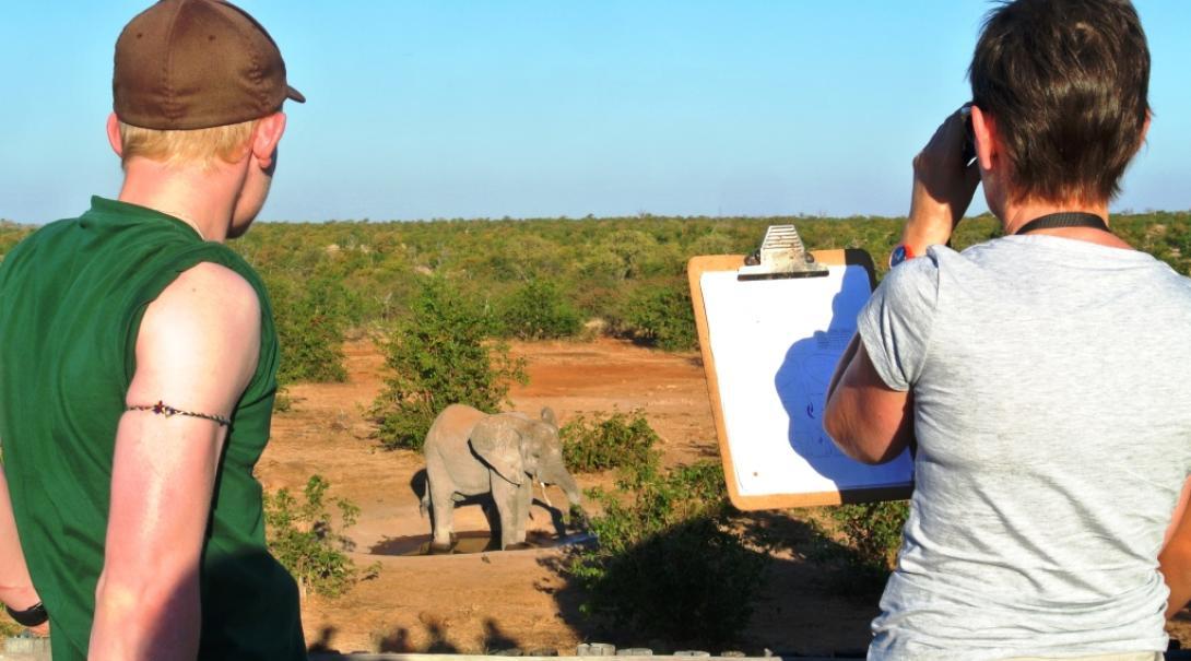 Un groupe d'écovolontaires de Projects Abroad collectent des données sur les éléphants au Botswana.